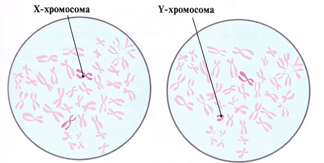 Жизнеспособность сперматозоидов при ко